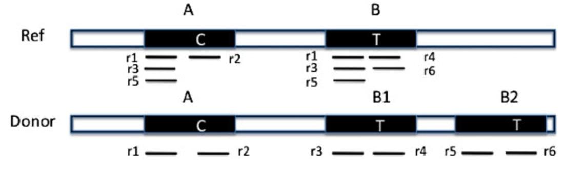 cnvem-figure1